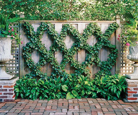 Small space landscaping ideas live art fences and english - Edera da interno ...
