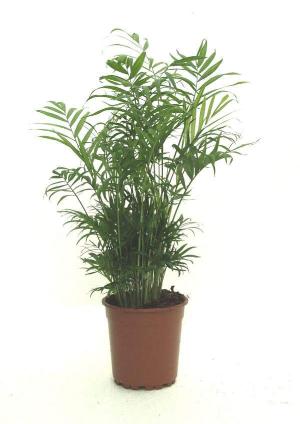 124 Best Images About House Plants On Pinterest Indoor