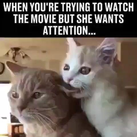 Cute Amazing Cat Video