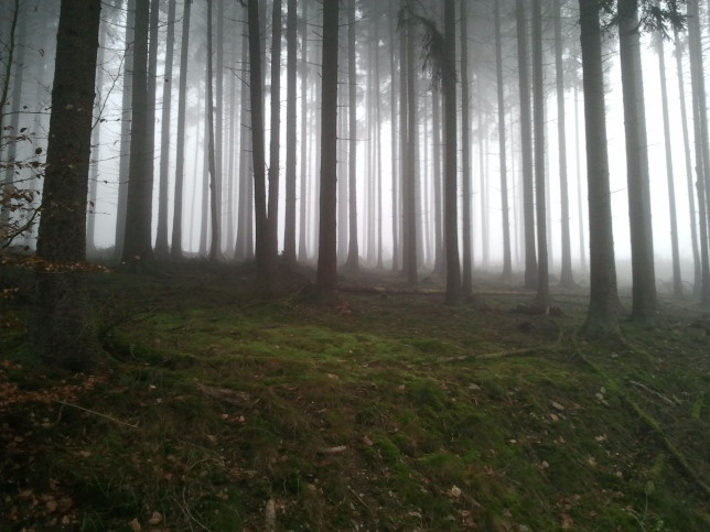 Cloud forest in Bad Schwalbach.