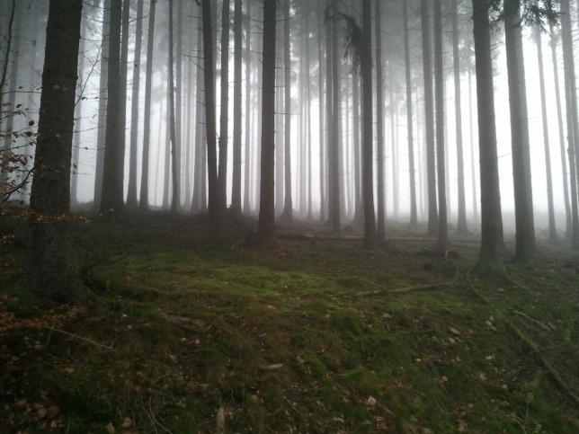 Cloud forest in Bad Schwalbach.