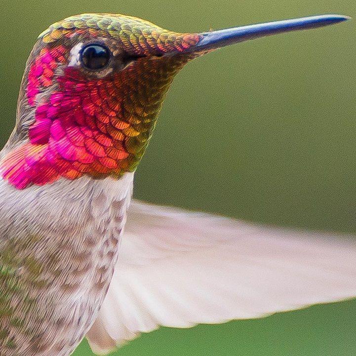 Hummingbird Whisperer Captures Close-Up Photos of Birds Visiting Her Backyard - My Modern Met