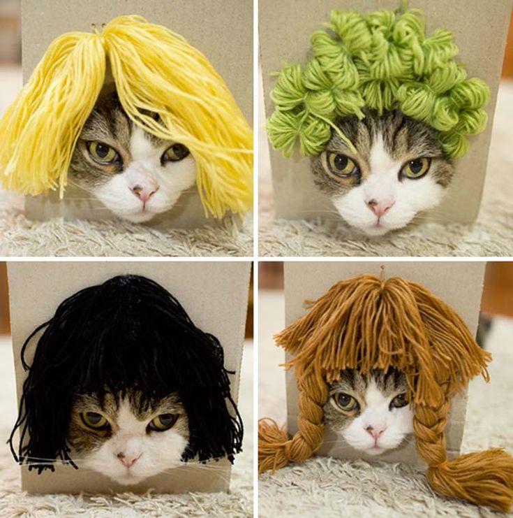 Мару (Maru) — 9-летняя шотландская вислоухая кошка из Японии, которую обожают сотни тысяч людей со всей планеты. Кошка имеет просто огромнейшее количество подписчиков на Ютуб — 550 тыся…