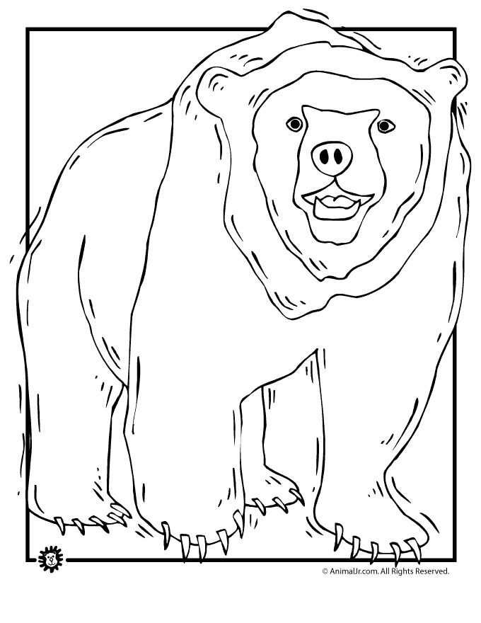 Bear Coloring Pages Grizzly Page Animal Jr