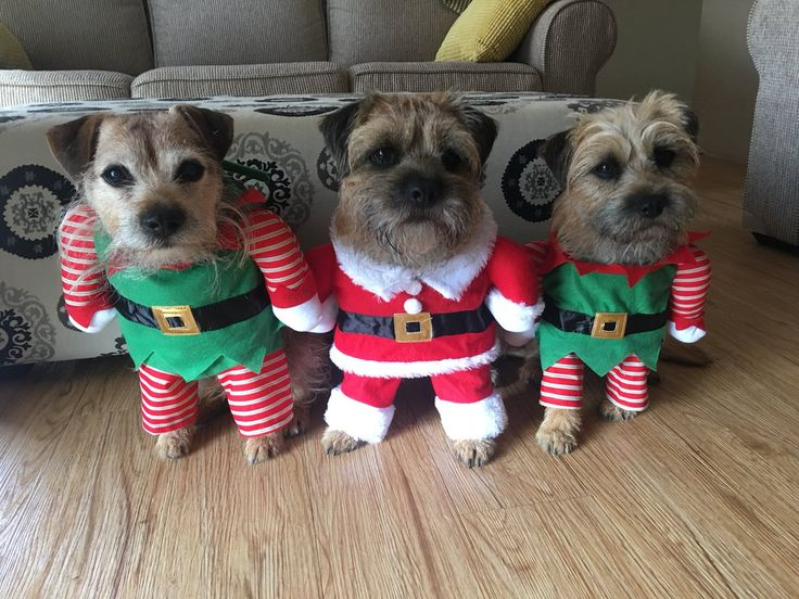 """Freddie & Melys on Twitter: """" Ready to rip open our presents. Not too sure if we can wait for another two days  #BTposse https://t.co/9yrtZXUbrE"""""""