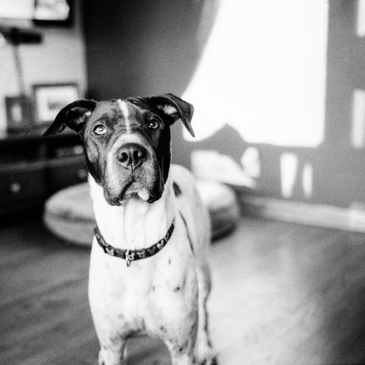 Yup. I still shoot Film. Black and white Ilford. Developed in my basement.