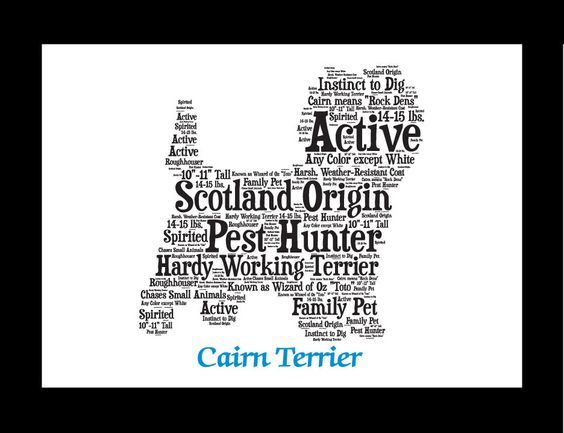 Traits of the Cairn Terrier Cairn Terriers have existed since the 15th century on the Isle of Skye, where they were used to hunt fox, badger, and otter. The dogs were adopt at bolting otters from thei