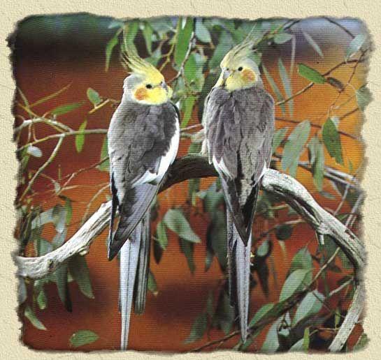 RainForest Birds Rain Forest Birds Parrot Macaw Cockatoo Sevierville tennessee