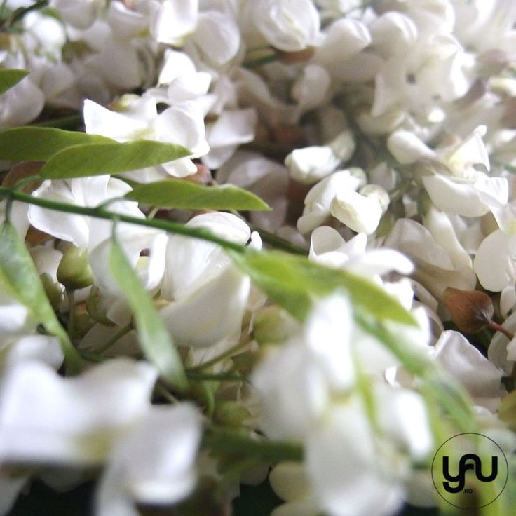 Flori de salcam _ yau concept _ elena toader (2)