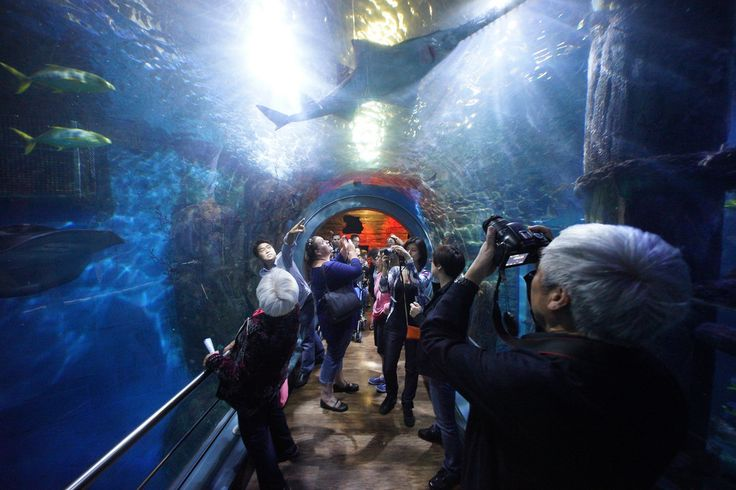 Sea life melbourne aquarium | Melbourne | Tripomizer Trip Planner
