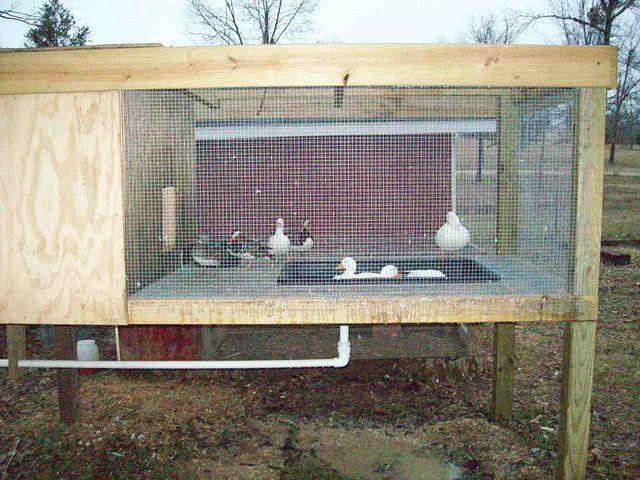 Best 25 duck pens ideas on pinterest duck coop duck for Duck shelter designs