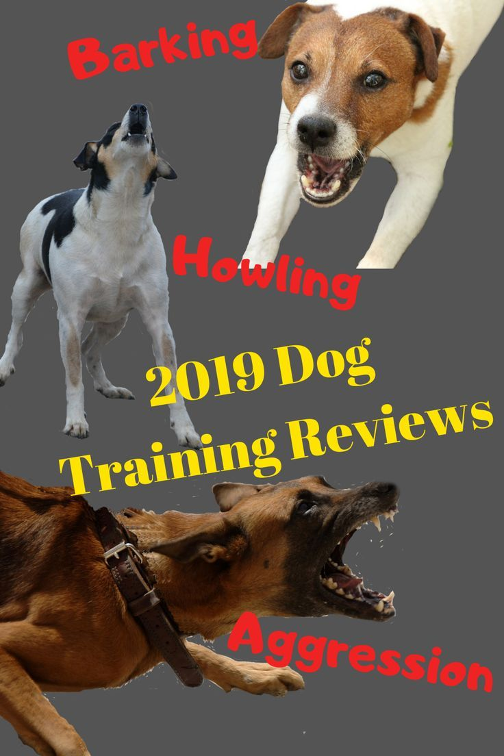 Reviews 02 Online Dog Training Rescue Dogs Dog Training