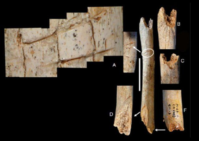 an analysis of the cannibalism in neanderthals Scientists studying neanderthal remains from a cave in belgium believe they  have found the first evidence of neanderthal cannibalism in.