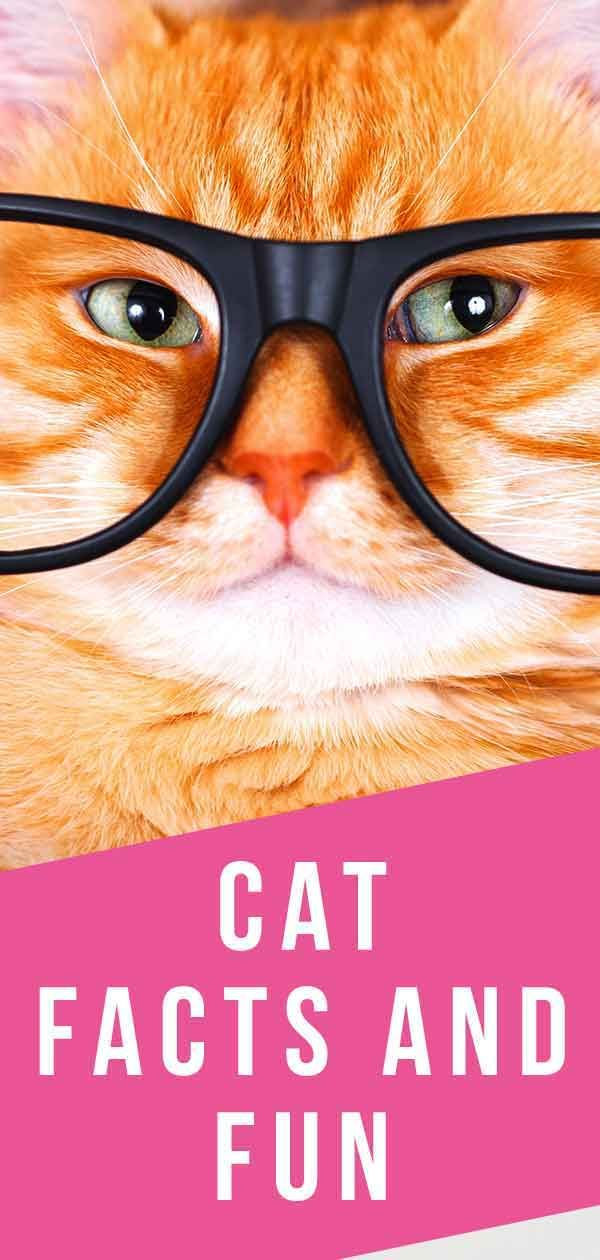 Cat Facts And Fun In 2020 Cat Facts Orange And White Cat Cat Colors
