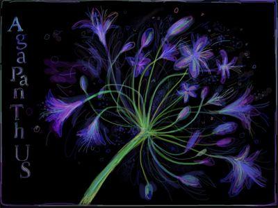 Agapanthus, iPad painting, Kathy Lewis. Digital art. iPad painting, flowers.