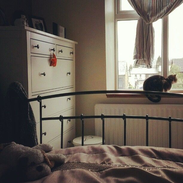 Photo by serinahartwell - Tilly Watching The World Go By