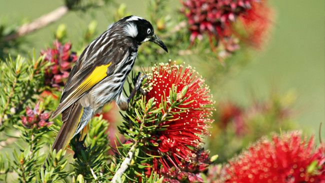 How to grow plants to attract birds