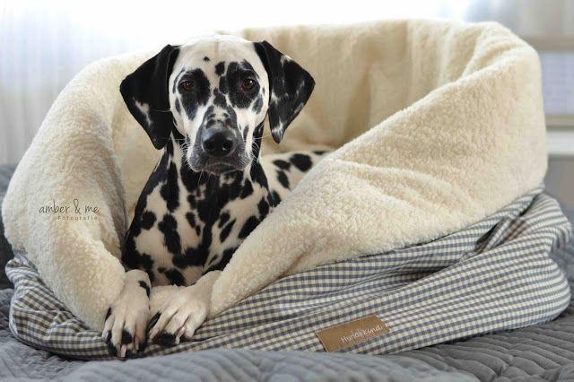 dieKuh Amber&Me Hundebett Kuschelsack Dalmatiner Dalmatian Hundekind Accessoire Hundeaccessoire Wolke7 Schlafen Kuscheln Herbst Winter warm kuschelig