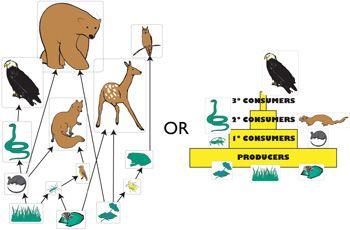 Save food chain bioersity food network trisha forward food chain