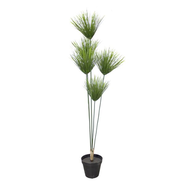 les 101 meilleures images du tableau plantes et arbustes pour l 39 ext rieur sur pinterest. Black Bedroom Furniture Sets. Home Design Ideas