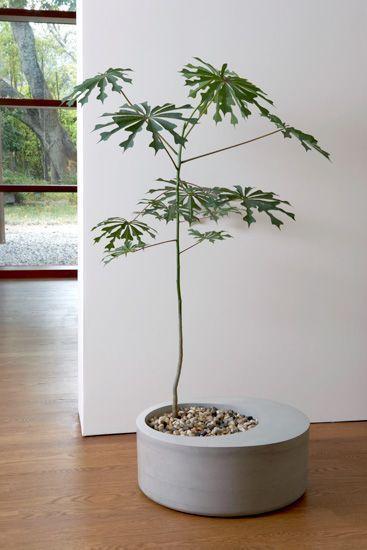 me gustaría uno más pequeño y con una planta de tacuara ( bambú )