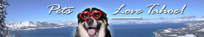 Pets Love Tahoe! Pet-friendly lodging at Lake Tahoe | Lake Tahoe Vacation Rentals Pets Allowed