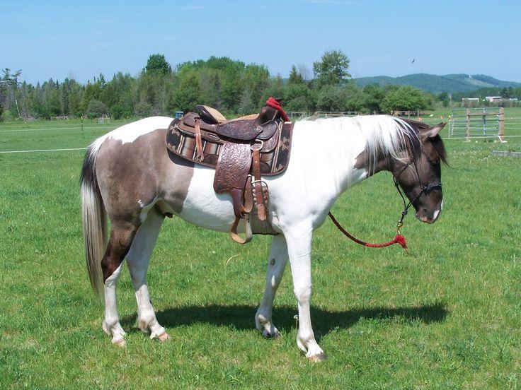 1103 Best Lets Ride Images On Pinterest Horses Horses