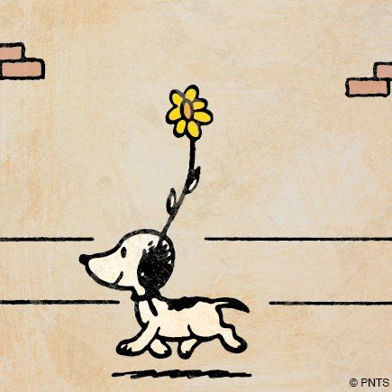 Snoopy's debut on October 04, 1950