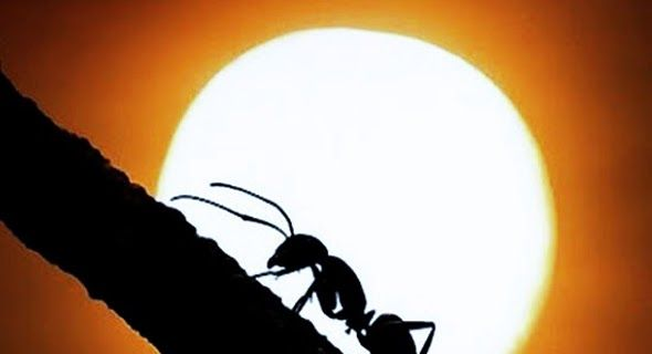 Kisah Semut Bisa Bicara AkuIslam.Id - Ketika rombongan Nabi Sulaiman as akan melintas lembah yang ditempati sebagai sarang semut beliau menyeru semut - semut itu untuk berlindung. Atas kebijaksanaan itu semut - semut itu memberikan pujian kepada Nabi. Itulah kisah semua yang bisa bicara kepada Nabi.  Semut Hitam ( Foto@U-Report )  Pada masa kanak-kanak Nabi Sulaiman as sudah menampakkan tanda - tanda kecerdasan ketajaman otak kepandaian berpikir serta ketelitian di dalam mempertimbangkan dan…