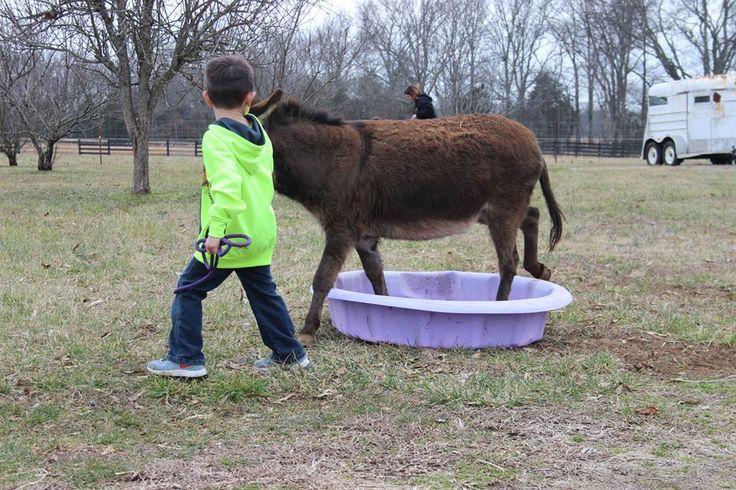 Courtesy: Legendary Farms Miniature Donkeys, Murfreesboro, TN (USA).