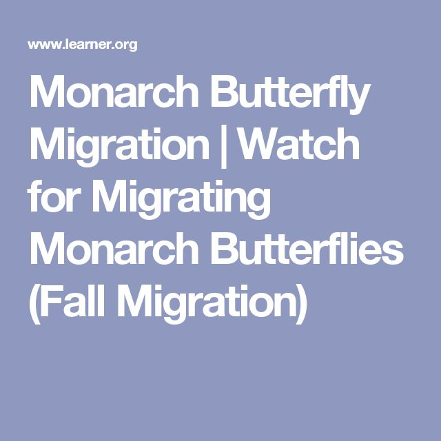 Monarch Butterfly Migration | Watch for Migrating Monarch Butterflies (Fall Migration)
