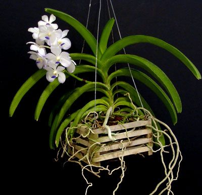 Tons of info on all different orchids
