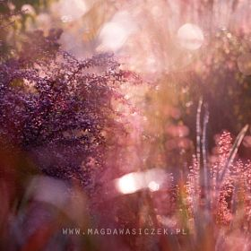 Magda Wasiczek / Collection_collection_arboretum-trojan-w-lato