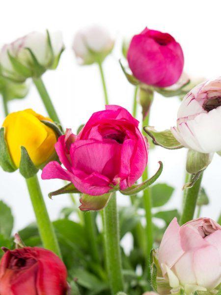 Blumen Online Bestellen Schnittblumen Katalog Blumigo