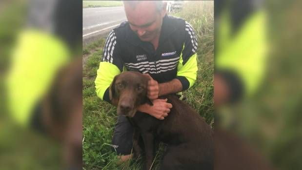New Zealand Man Finds Missing dog Dog After Chartering a Helicopter https://i.stuff.co.nz/the-press/news/mid-canterbury-selwyn/102088971/man-who-chartered-chopper-in-search-for-missing-labrador-finds-dog-300-metres-from-home-a-week-later?cid=facebook.post.102088971