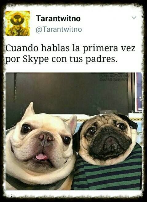 FOTOS DIVERTIDAS PARA WHATSAPP #memes #chistes #chistesmalos #imagenesgraciosas #humor #funny #amusing #fun #lol #lmao #hilarious #laugh #photooftheday #friend  #crazy #witty #instahappy #joke #jokes #joking #epic #instagood #instafun