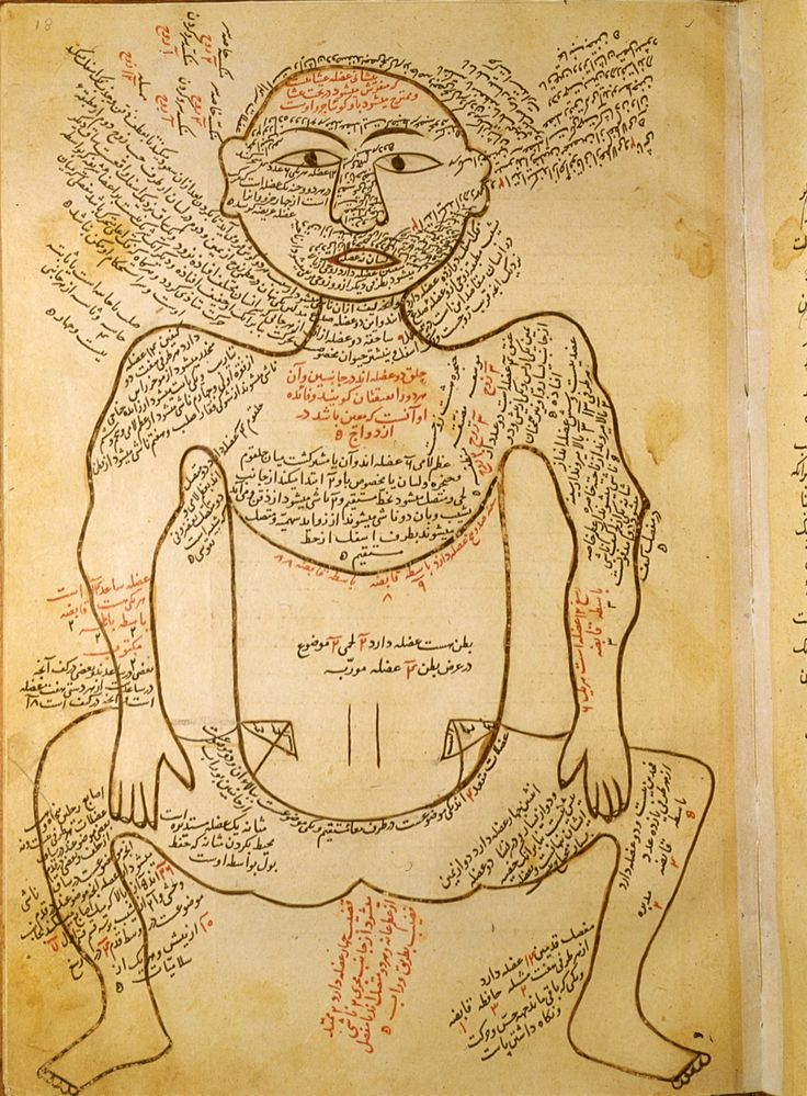 Mansur ibn Ilyas's 14th-century work on anatomy contained illustrated chapters on five systems of the body: bones, nerves, muscles, veins and arteries. This page depicts the arteries, with the internal organs shown in watercolors.