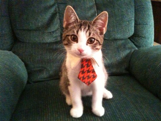 cats in ties.