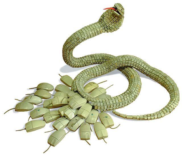 Keyboard snake