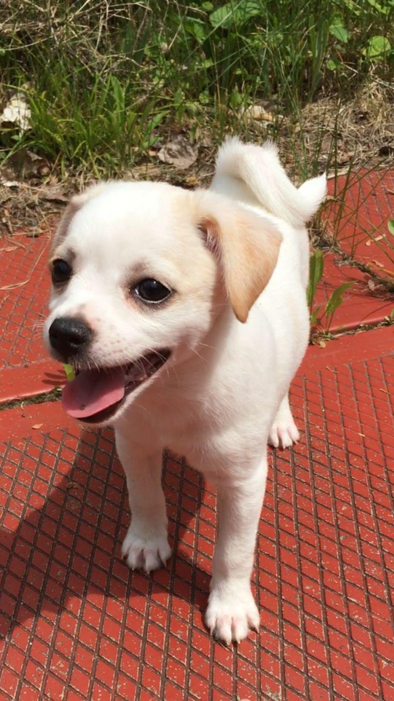 Happy adorable puppy