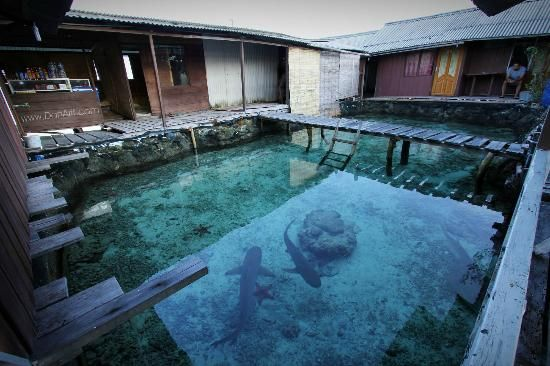 Wisma Apung Karimunjawa (Karimun Jawa, Indonesia) - Lodge Reviews - TripAdvisor