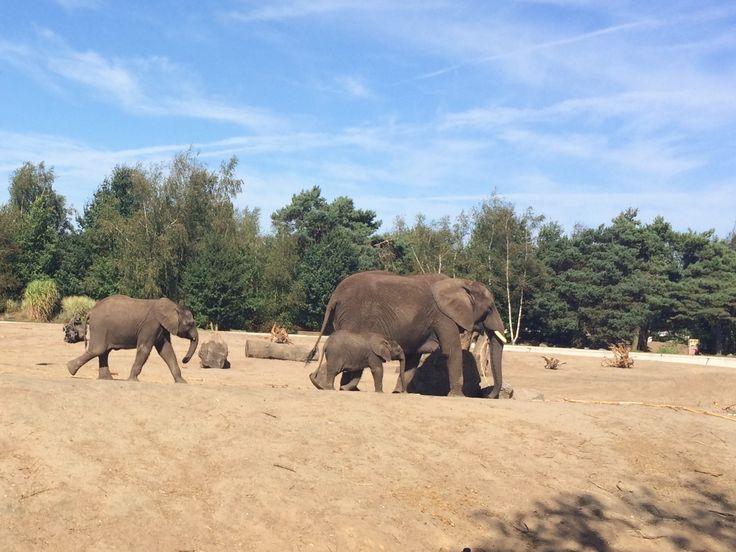 Beekse bergen olifanten Idee fotobehang Photo credits: Anne van Herpt
