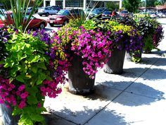 Rock planters with beautiful plants and flowers - perfect to mix textures and colors