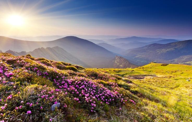 sunrise mountains flowers - photo #3