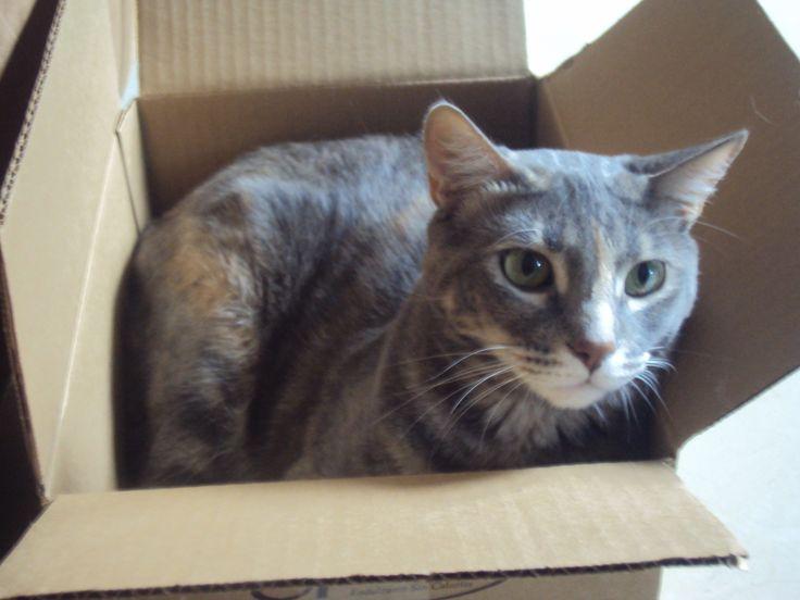 Izu demostrando que puede entrar en cualquier caja.