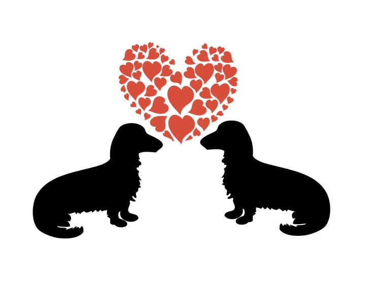 Download Doggy Love dachshund dogs graphic and svg file By Zoss ...