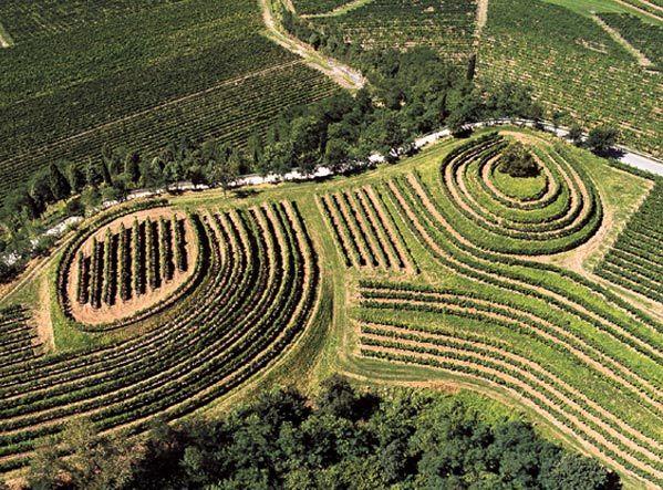 Колли Ориентали дель Фриули. Белые, красные и десертные вина из Фриули