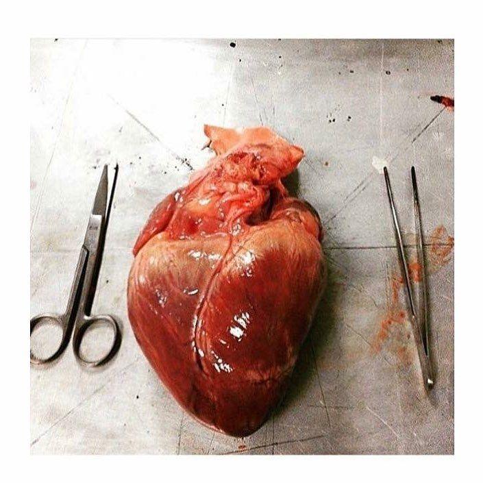 abbastanza Oltre 25 fantastiche idee su Cuore umano su Pinterest | Anatomia  SO58