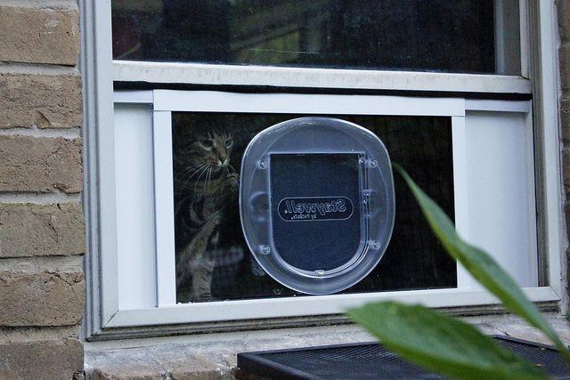 Cat Zone 3.jpg | Flickr - Photo Sharing!