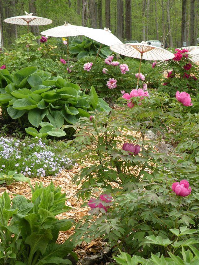 Garden Design On A Hill best 25+ hill garden ideas on pinterest   sloping garden, sloped